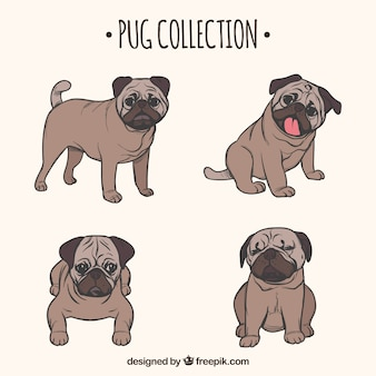 Ręcznie rysowane kolekcji pug