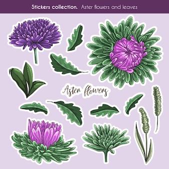 Ręcznie rysowane kolorowa kolekcja naklejek aster kwiatów i liści. szczegółowo ilustracja botaniczna w stylu wyciągnąć rękę.
