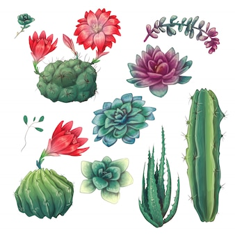 Ręcznie rysowane kolorowe kaktusy i zestaw soczysty.