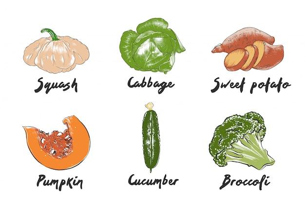 Ręcznie rysowane kolorowe szkice warzyw