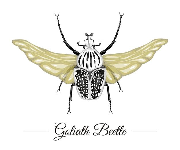 Ręcznie rysowane kolorowe tropikalny chrząszcz goliat ze skrzydłami na białym tle. logotyp o tematyce tropic do naturalnego projektowania. ilustracja egzotycznych owadów