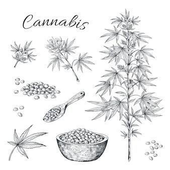 Ręcznie rysowane konopi. konopie z liśćmi nasion i wadami.