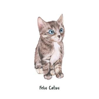 Ręcznie rysowane kot domowy na białym tle