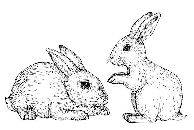 Ręcznie rysowane królik szkic króliczek siedzący
