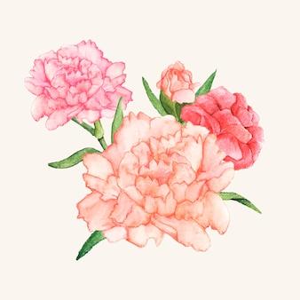 Ręcznie rysowane kwiat goździka na białym tle