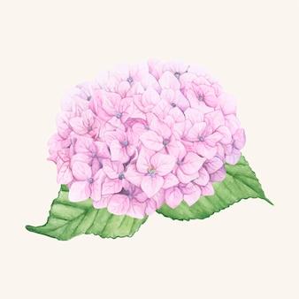 Ręcznie rysowane kwiat hortensji na białym tle