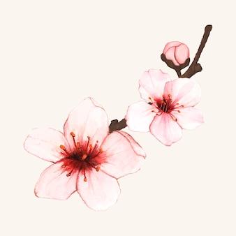 Ręcznie rysowane kwiat wiśni kwiat na białym tle
