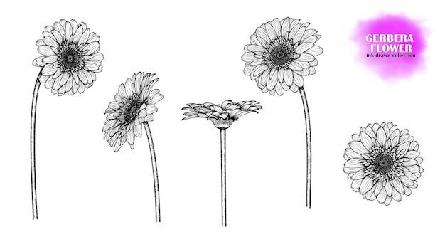 Ręcznie rysowane kwiaty gerbera