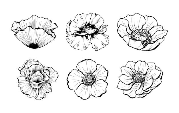 Ręcznie rysowane kwiaty maku