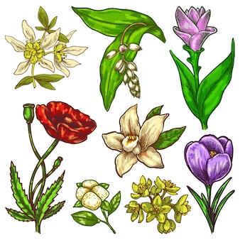 Ręcznie rysowane kwiaty szkic wektor kwiatowy zestaw