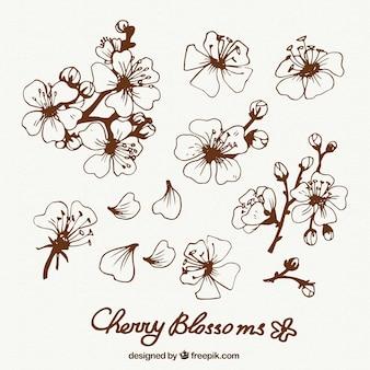 Ręcznie rysowane kwiaty wiśni