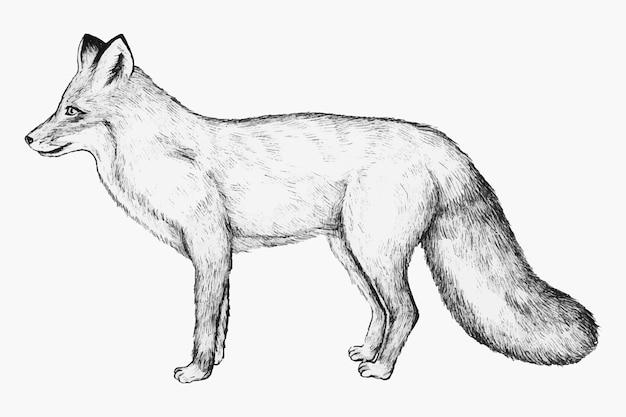 Ręcznie rysowane lis
