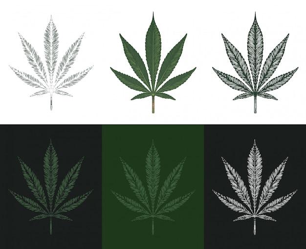 Ręcznie rysowane liść marihuany. zestaw liści konopi