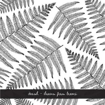 Ręcznie rysowane liści paproci