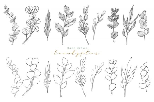 Ręcznie rysowane liście eukaliptusa