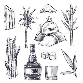 Ręcznie rysowane liście trzciny cukrowej, łodygi cukrowe, zbiory trzciny cukrowej, szkło i butelka rumu. wektor zestaw w stylu vintage grawerowania