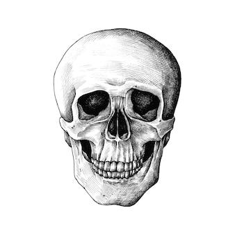 Ręcznie rysowane ludzką czaszkę na białym tle