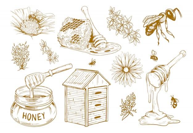 Ręcznie rysowane miód płaski szkic zestaw