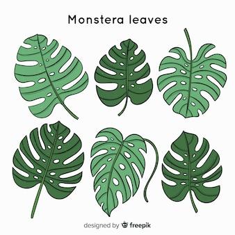 Ręcznie rysowane monstera liście kolekcji