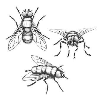 Ręcznie rysowane muchy. owad ze skrzydłem, biologią i szkicem