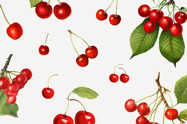 Ręcznie rysowane naturalna świeża czerwona wiśnia