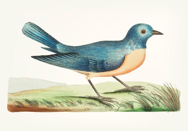 Ręcznie rysowane niebieski warbler