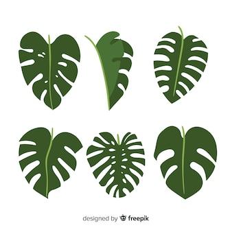 Ręcznie rysowane opakowanie liści monstera