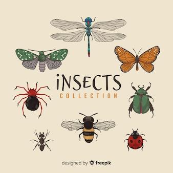 Ręcznie rysowane opakowanie owadów