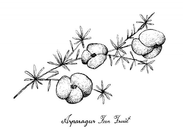 Ręcznie rysowane owoców szparagów paproci na białym tle