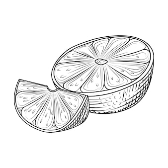 Ręcznie rysowane pomarańczowy owoc. plasterki pomarańczy na białym tle. egzotyczne owoce tropikalne. grawerowanie w stylu vintage. ilustracja wektorowa