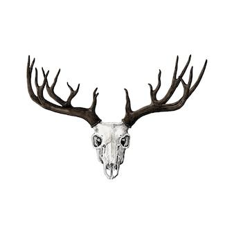 Ręcznie rysowane poroża jeleni na białym tle