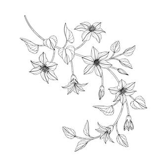 Ręcznie rysowane powojnik ilustracja kwiatowy z grafiką na białym tle. zaprojektuj wystrój logo, karty, zapisz datę, powitanie, zaproszenia ślubne, plakat, baner.