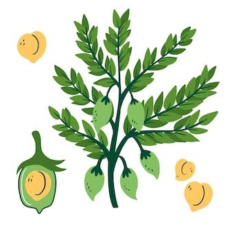 Ręcznie rysowane pożywne fasolki ciecierzycy i ilustracja roślin
