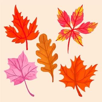 Ręcznie rysowane projekt kolekcji jesiennych liści
