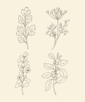 Ręcznie rysowane przyprawy i zioła