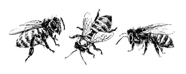 Ręcznie rysowane pszczoła szkic ilustracji wektorowych czarny miód