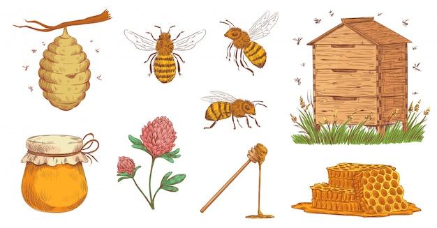 Ręcznie rysowane pszczoły miodnej. grawerowanie pszczelarz, pszczoły o strukturze plastra miodu i vintage pszczelarstwo wektor zestaw ilustracji