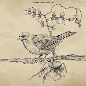 Ręcznie rysowane ptak na gałęzi