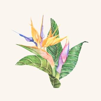 Ręcznie rysowane ptak rajski kwiat na białym tle