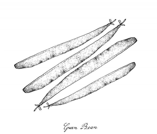 Ręcznie rysowane pyszne świeże zielone fasolki szparagowe