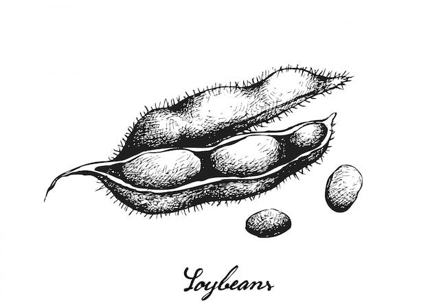 Ręcznie rysowane pyszne świeże zielone soi