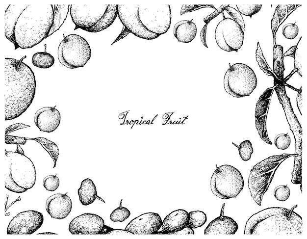 Ręcznie rysowane ramki chińskich śliwek i orzechów luna owoców