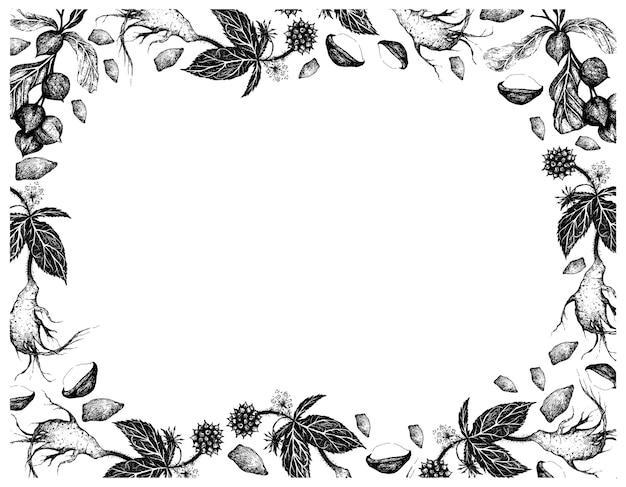 Ręcznie rysowane ramki makadamia z żeń-szeniem syberyjskim