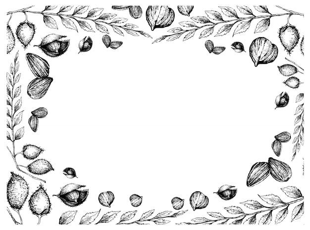 Ręcznie rysowane ramki z nasion słonecznika i ciecierzycy