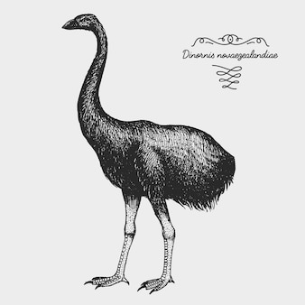 Ręcznie rysowane realistyczny ptak, styl graficzny szkicu,
