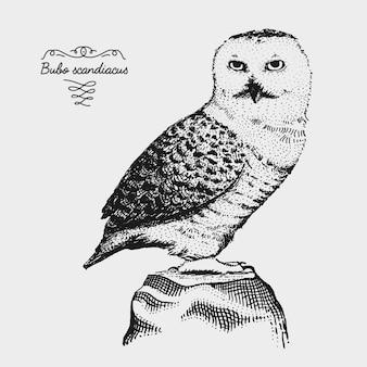 Ręcznie rysowane realistyczny ptak, szkic stylu graficznego,