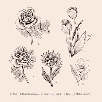 Ręcznie rysowane rocznika botanika kolekcja kwiatów