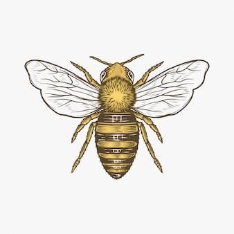 Ręcznie rysowane rocznika pszczoły