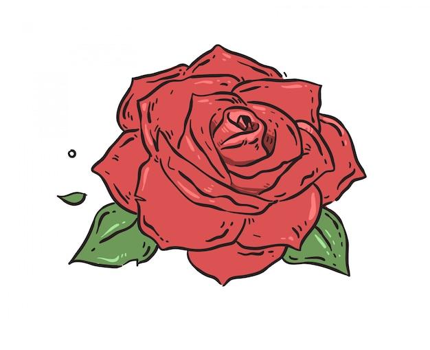 Ręcznie rysowane róża z liśćmi