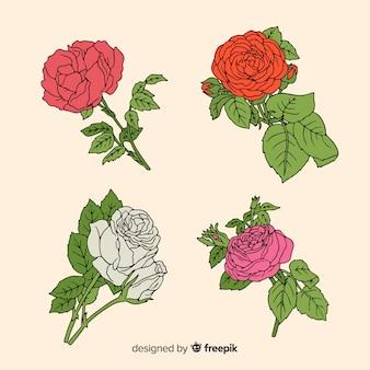 Ręcznie rysowane róże kolekcja